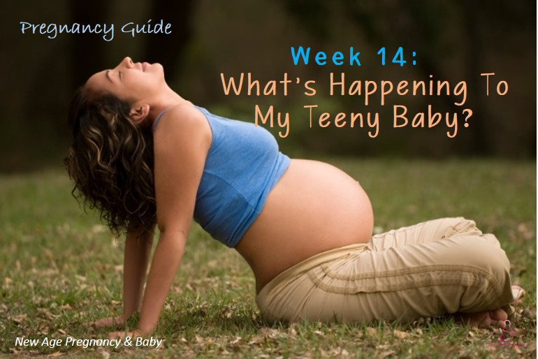 week to week pregnancy guide for new parents