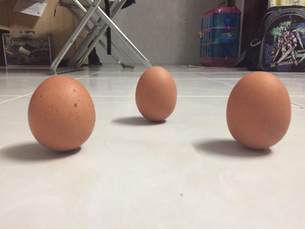 eggs can stand